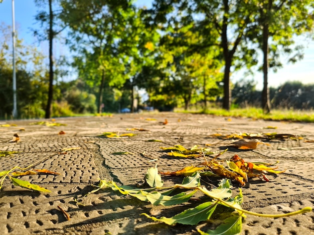 Beau fond de flou artistique feuilles d'automne tombées vue d'en bas
