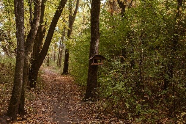 Beau Fond De Forêt Chaude Avec Sentier Pédestre Et Mangeoire à Oiseaux En Bois Suspendue Au Tronc D'arbre Photo Premium