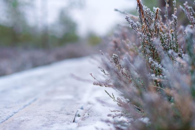 Beau fond d'hiver, givre sur un marais