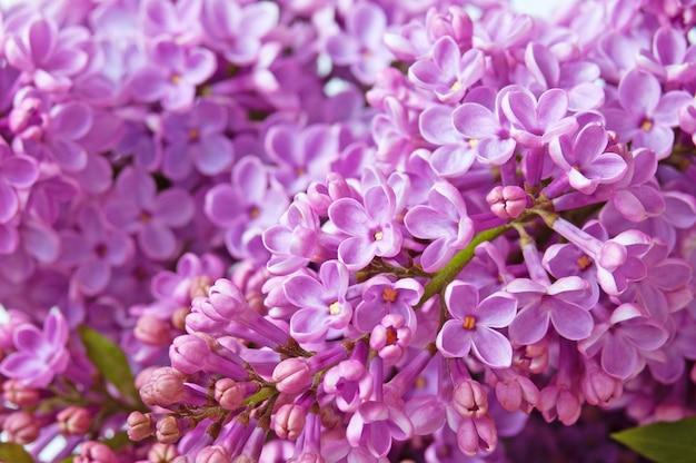 Beau fond lilas violet