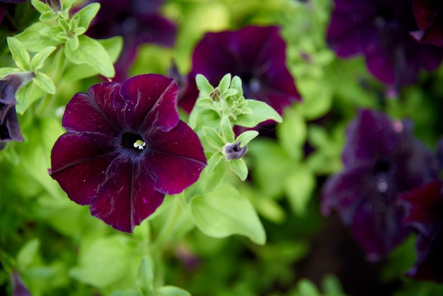 Beau fond naturel avec des fleurs.