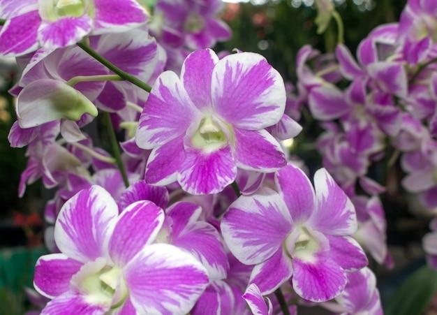 Beau fond d'orchidée.