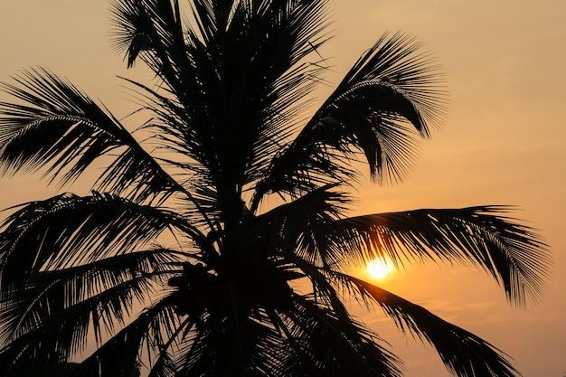 Beau fond de palmiers coucher de soleil envoûtant