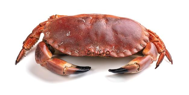 Beau gâteau de crabe découpé isolé