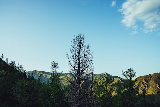 Beau grand arbre sec sur la colline et le ciel bleu avec des branches sèches de nuage d'arbre dans le ciel bleu