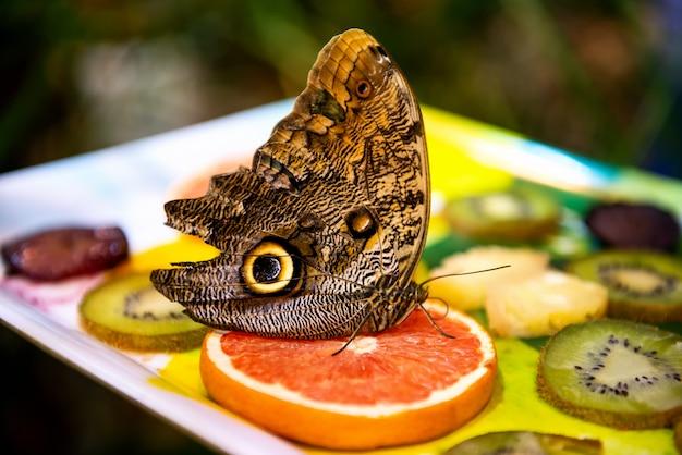 Un beau grand papillon assis sur des fruits lumineux sur floue