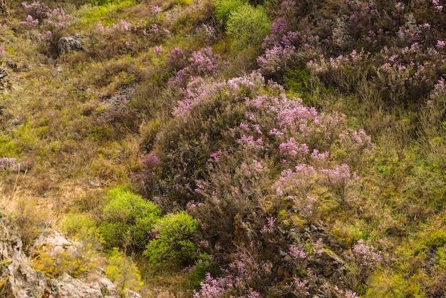 Beau gris rocheux texturé avec des arbres verts et des fleurs roses. gros plan de la falaise de montagne de surface.