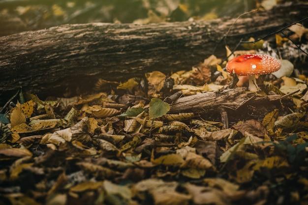 Beau gros plan de champignons forestiers.