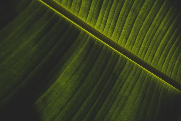 Beau gros plan d'une feuille de bananier vert