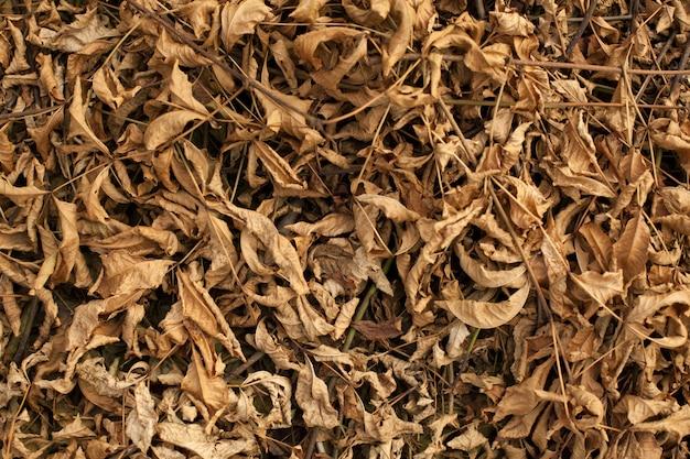 Beau gros plan de feuilles séchées