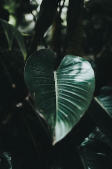 Beau gros plan d'une grande feuille exotique dans une forêt tropicale