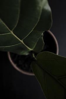 Un beau gros plan de plante