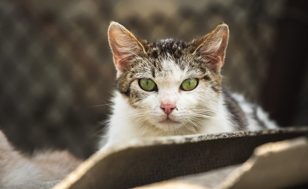 Beau gros plan de portrait de mère de chat errant et sans-abri avec fond de casse