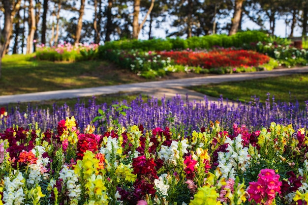 Beau jardin dans la vallée de la province de loei en thaïlande.