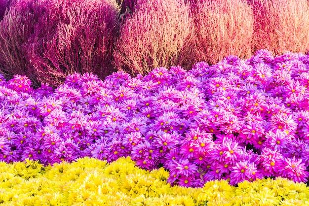 Beau jardin et fleur