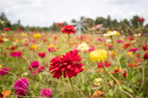 Beau jardin de fleurs de chrysanthème et beau papillon sucant le nectar du pollen