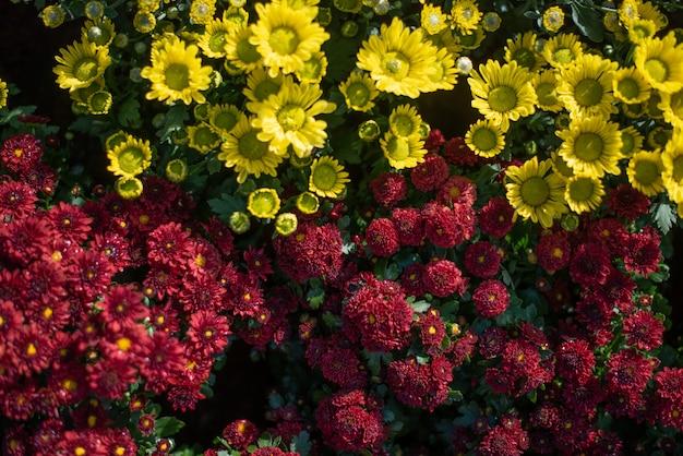 Beau jardin de fleurs
