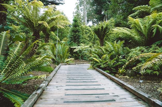 Beau jardin avec des palmiers et des fougères