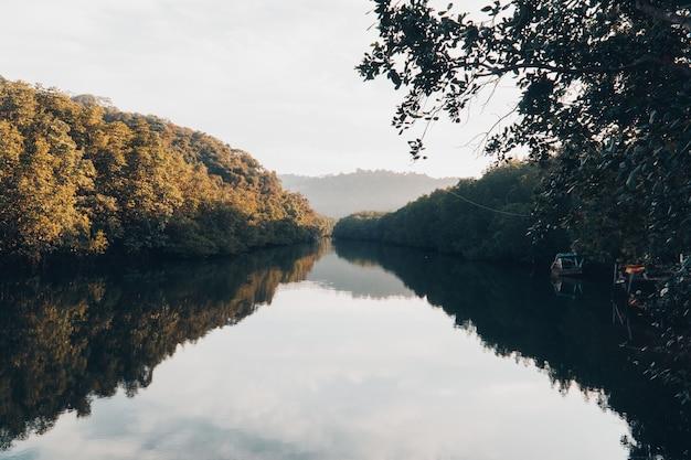 Beau lac et forêt de mangroves.