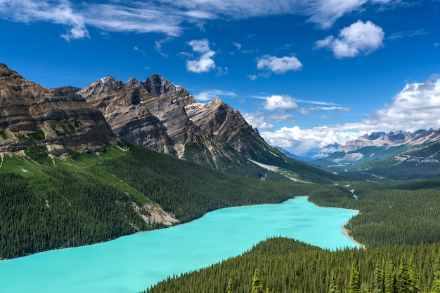 Beau, lac peyto, parc national banff, alberta, canada