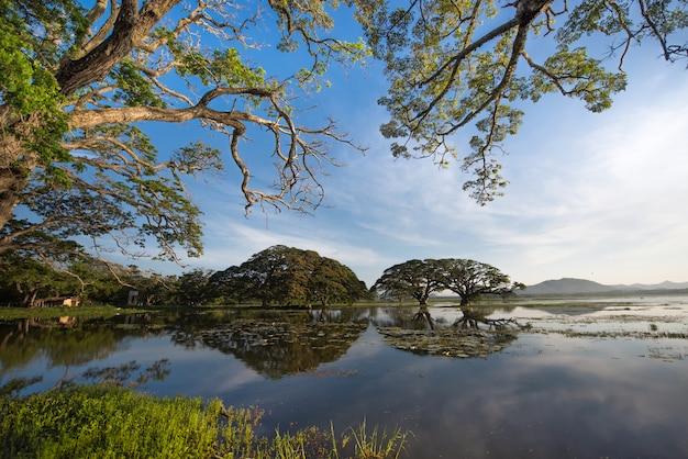 Beau lac peyto, parc national banff, alberta, canada