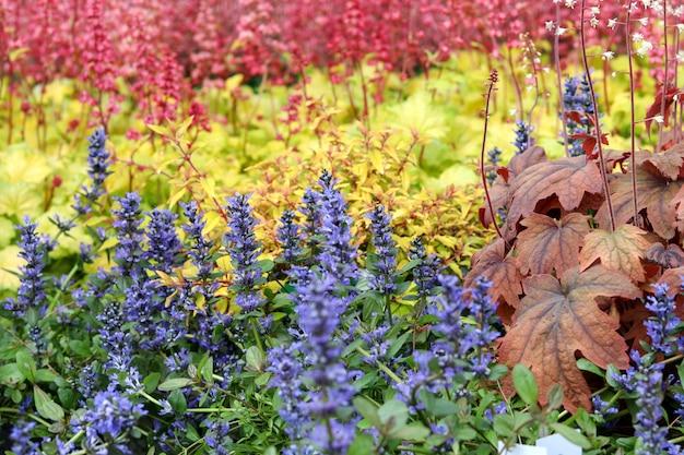 Beau mélange coloré de fleurs vivaces bleues, jaunes et rouges.