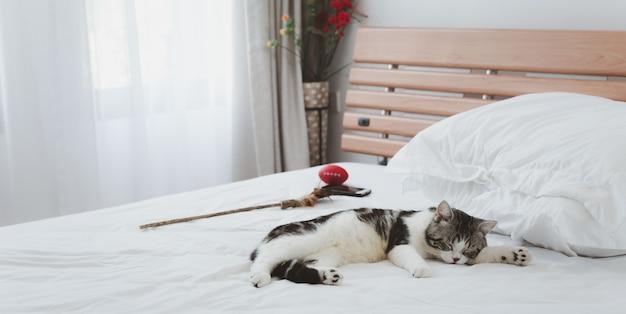 Un beau et mignon chats roux dorment sur un lit blanc