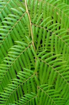Beau modèle de feuilles vertes.
