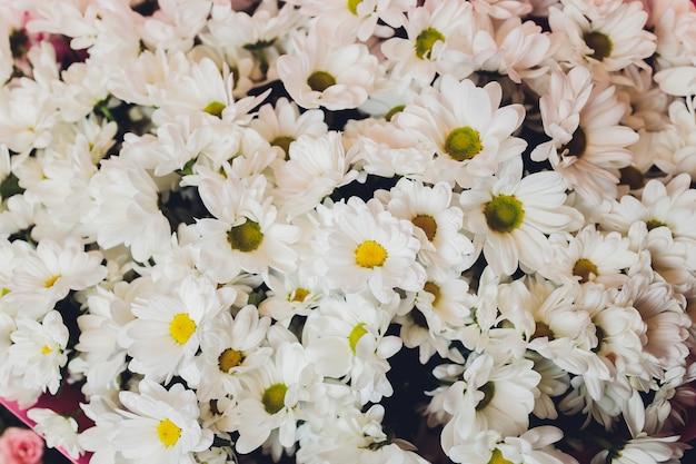 Beau motif de bouquet de fleurs de marguerite de camomille