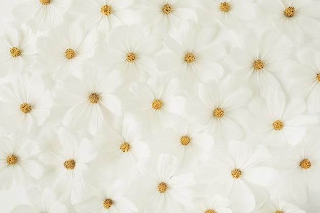 Un beau motif avec de la camomille blanche, des fleurs de marguerites. texture florale ou impression. vacances, mariage, anniversaire, concept d'anniversaire