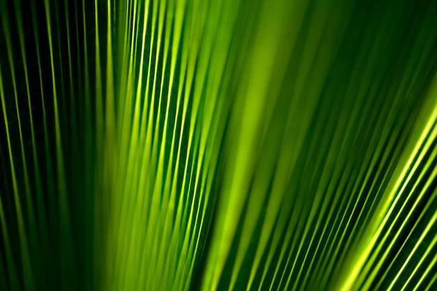 Beau motif exotique de feuilles de palmier tropical vert