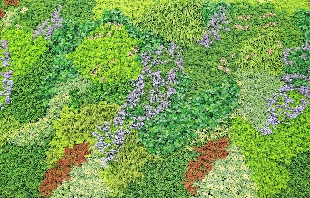 Beau mur de fleurs et de feuilles pour la décoration.