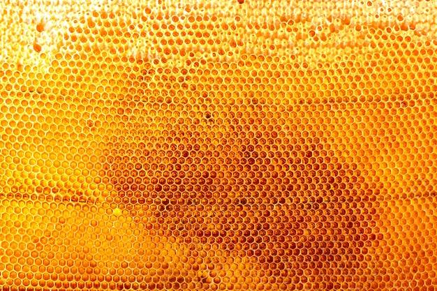 Beau nid d'abeille jaune avec du miel,