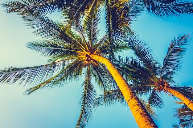 Beau palmier sur ciel bleu