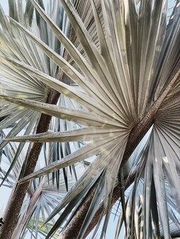 Beau palmier exotique tropical. motif naturel minimaliste et avec des couleurs pâles