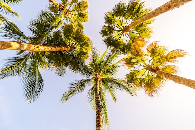 Beau palmier tropical cocotier avec fond de ciel