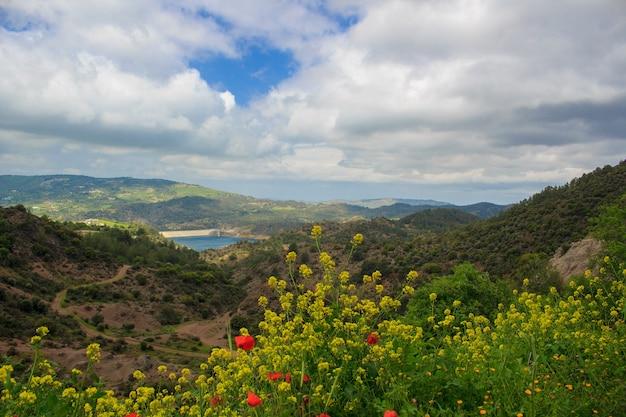 Beau panorama avec des montagnes, des nuages et des fleurs aux couleurs vives au premier plan.