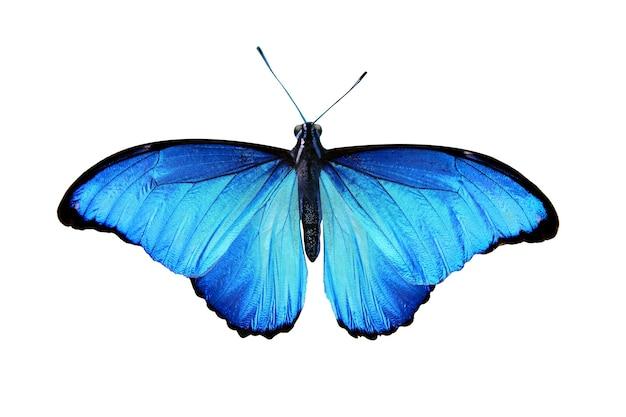 Beau papillon bleu isolé sur blanc