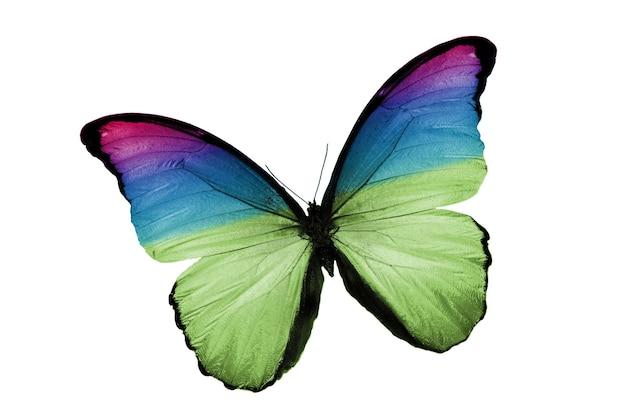 Beau papillon bleu isolé sur fond blanc