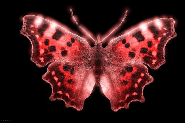 Beau papillon de couleur rougeoyante isolé sur fond noir