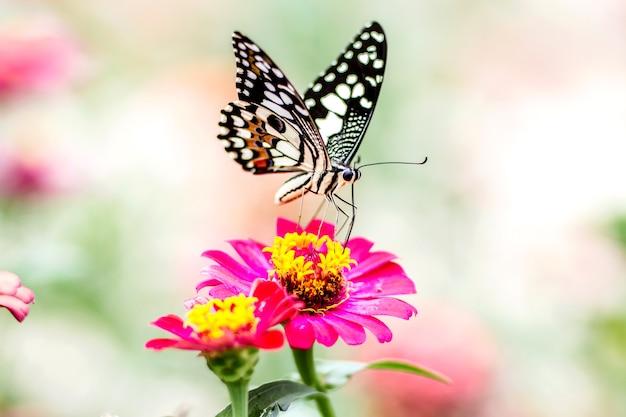 Beau papillon avec fleur et arrière-plan flou