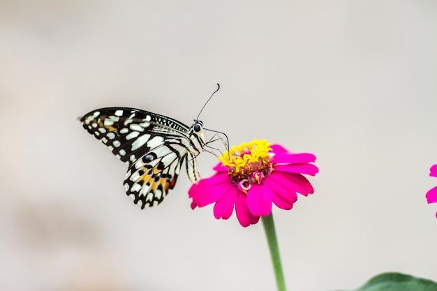 Beau papillon sur fleur et arrière-plan flou
