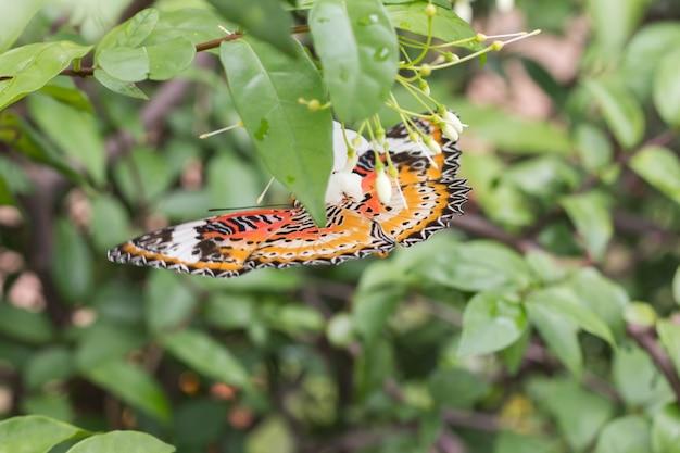 Beau papillon sur une fleur blanche flou ou flou flou