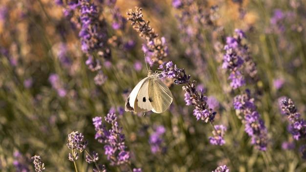 Beau papillon sur fleur dans la nature