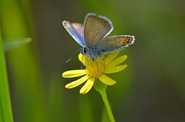 Beau papillon sur une fleur