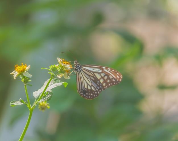 Beau papillon sur fleur
