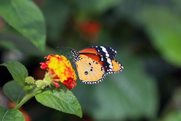 Beau papillon tropical sur fond de nature floue