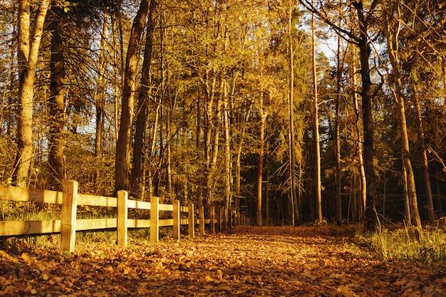 Beau parc d'automne