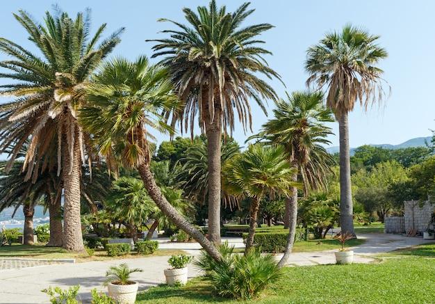 Un beau parc d'été avec vue matinale de palmiers près de villa milocher (monténégro, budva)