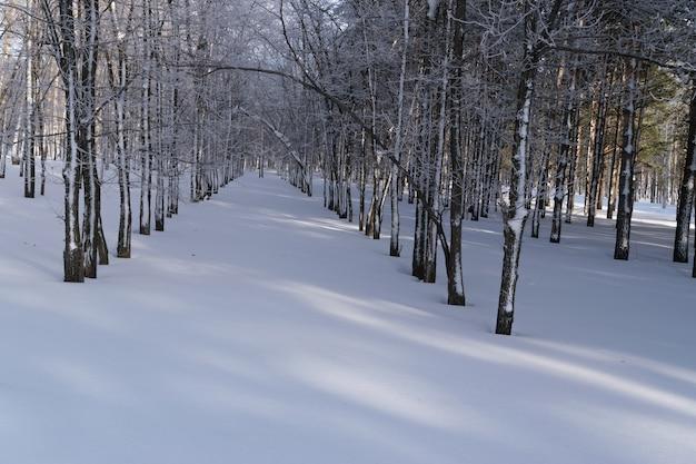 Beau parc d'hiver enneigé en journée glaciale et ensoleillée